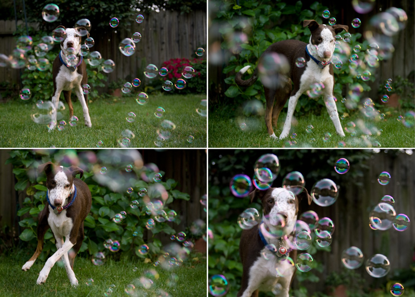 Do dogs like bubbles? It's bubblelicious Ollie