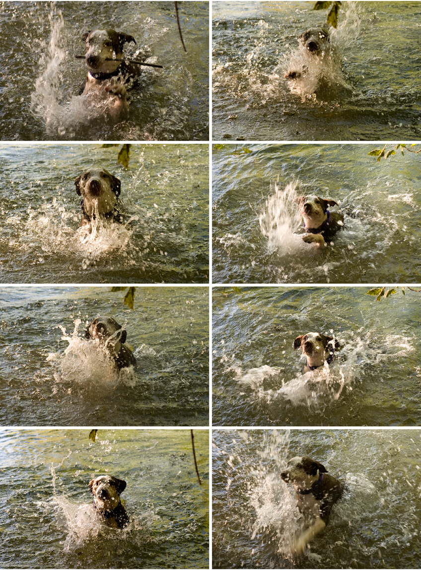 DOGPADDLIN' OLLIE – DOG BLOG – 6-29-11