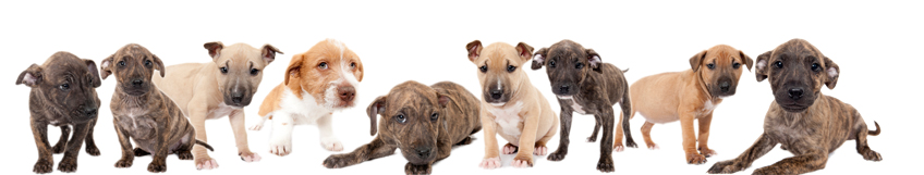 PUPPIES GALORE AND MANY MORE AT THE CITY SHELTER!
