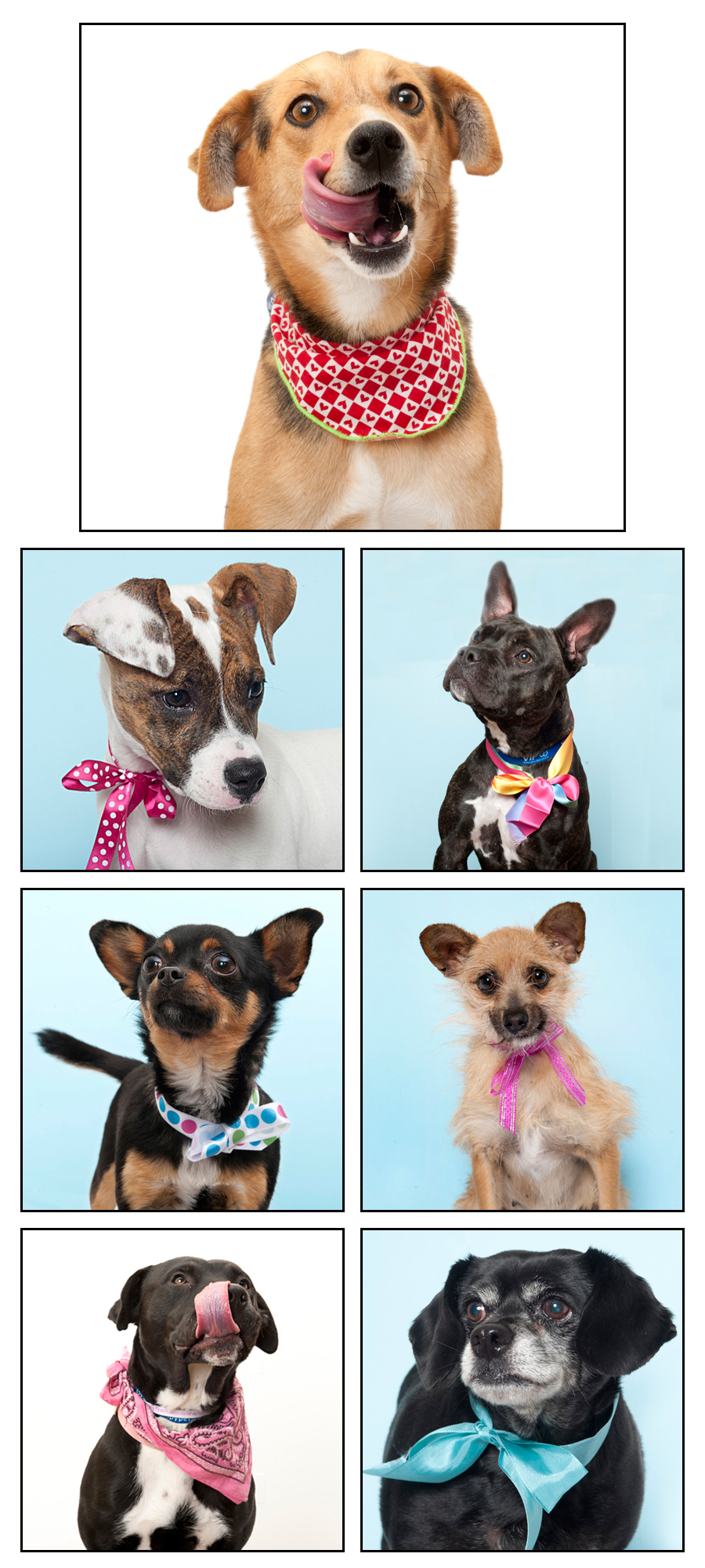Crazy Cute! Adorable Adoptables at the Sacramento City Shelter