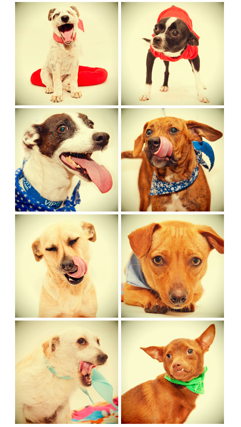 Loads of newcomers at the Sacramento animal shelter