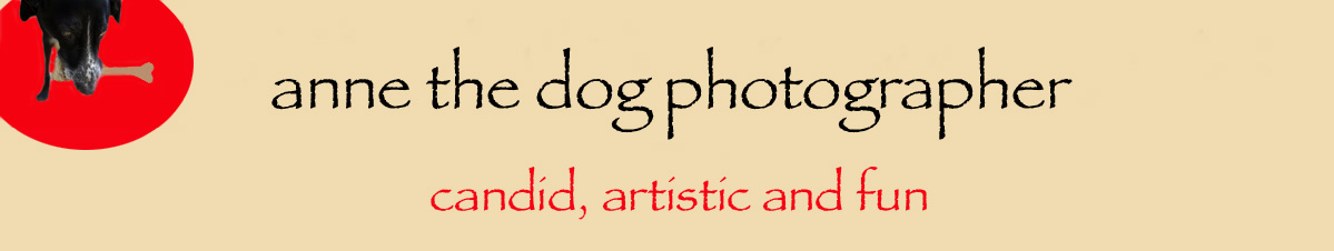 Anne The Dog Photographer logo